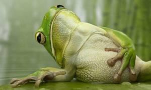 Κάτι σκοτώνει τα βατραχάκια όλου του πλανήτη, δυστυχώς!