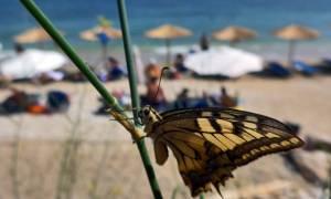 Δεκαπενταύγουστος στην Αθήνα: Ο πλήρης οδηγός επιβίωσης