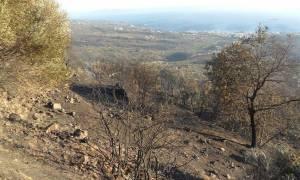 Συγκλονιστικές μαρτυρίες από τη φωτιά στη Νεάπολη - Δ. Μέντης: «Ξύπνα, έπιασε φωτιά!»
