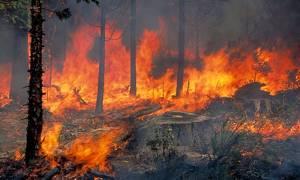 «Συναγερμός» στην Πυροσβεστική - Φωτιά στη Ρόδο
