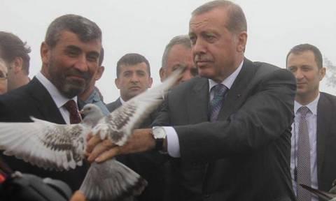 Πέρδικα βρίσκει καταφύγιο στο… φιλόξενο κεφάλι του «οικολόγου»  Ερντογάν (video)