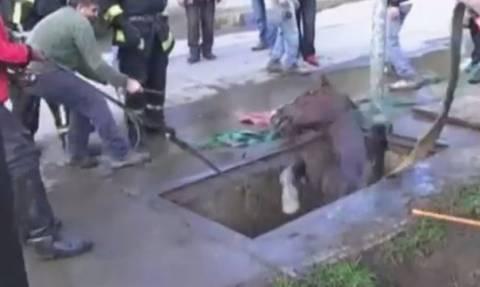 Χιλή: Δραματική διάσωση αλόγου – Δείτε πού είχε πέσει (video)