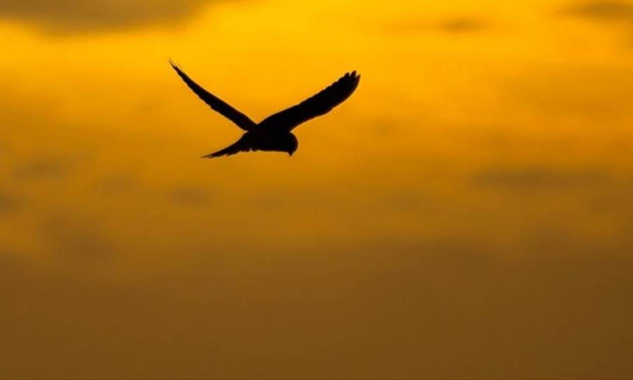 Αμμόχωστος: Πρωτιά στην παράνομη θανάτωση πουλιών στη Μεσόγειο
