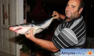 Βόλος: Ψαράς μάζεψε τα δίχτυα και βρήκε καρχαριάκι (photos)!