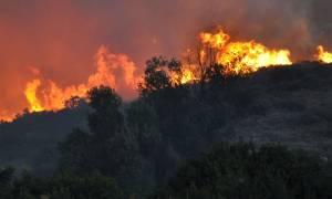 Άραξος: Σε εξέλιξη μεγάλη πυρκαγιά στο δάσος της Καλογριάς