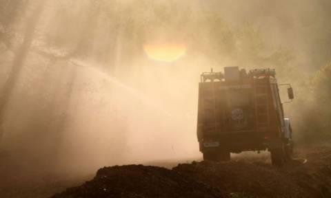 Άραξος: Υπό έλεγχο η φωτιά στο δάσος της Καλογριάς