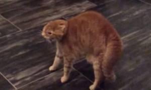 Γάτα έτοιμη για όλα - Η φάρσα που την εξαγρίωσε (video)