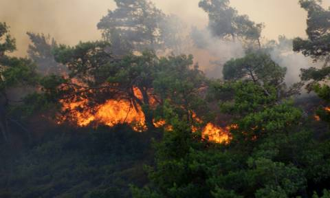 Πυρκαγιά ξέσπασε στα Μενινά της Καλαμάτας