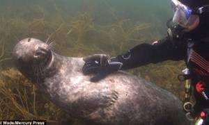 Σχέσεις… στοργής κάτω από το νερό: Δύτης και φώκια σε υποθαλάσσιο «φλερτ» (video)
