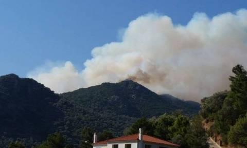 Λέσβος: Υπό έλεγχο η φωτιά - Στάχτη εκατοντάδες στρέμματα δάσους (video)