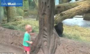 Τα παιδία παίζει – Αγοράκια και γοριλάκι σε στιγμές ξέφρενου παιχνιδιού (video)