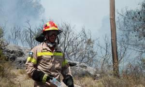 Aχαΐα: Φωτιά σε αγροτική έκταση - Δεν απειλούνται κατοικίες (video)