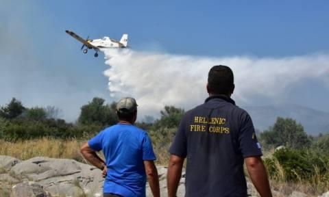 Πυρκαγιά και στη Φωκίδα
