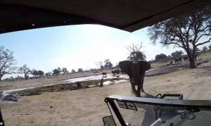 Εξαγριωμένος ελέφαντας επιτίθεται σε τουρίστες και αναποδογυρίζει το όχημά τους (video)