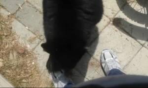 Δείτε τον ατρόμητο που άφησε να τον δαγκώσει μια… αρκούδα! (video)