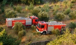 Ηράκλειο: 40 στρέμματα έκαψε η φωτιά στον Στείρωνα