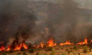 Πάφος: Αρχίζει η καταγραφή ζημιών από τις πυρκαγιές