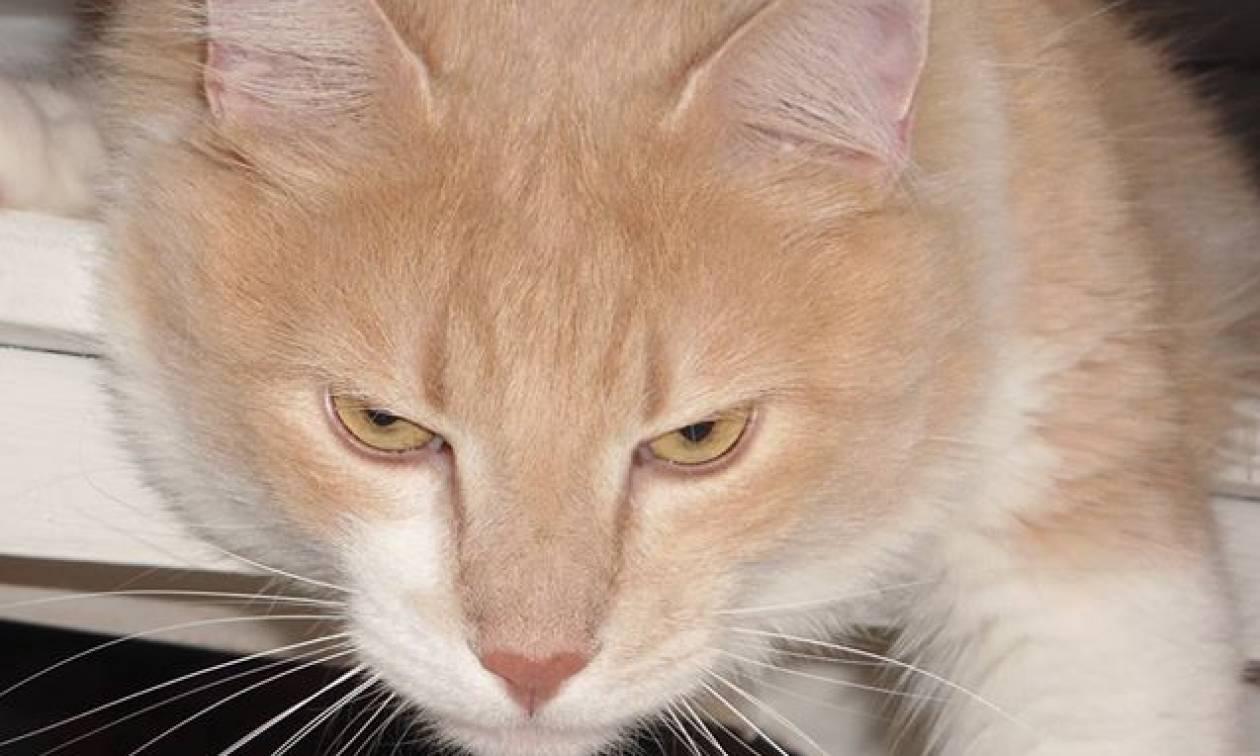 Κόμμα για ζώα: Καταγγελίες και όχι δημόσια δικαστήρια