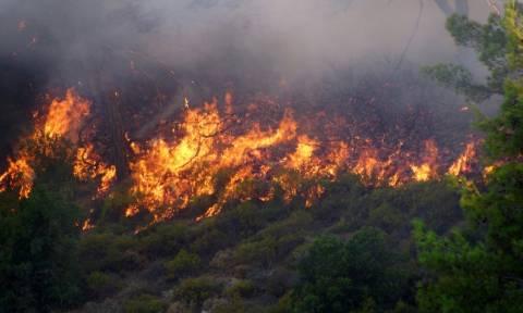 Σε αυξημένη ετοιμότητα επτά νομοί της χώρας λόγω υψηλού κινδύνου πυρκαγιάς