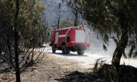 Θεσσαλονίκη: Υπό μερικό έλεγχο η φωτιά στο Σοχό