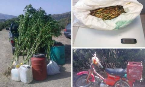 Λάρισα: Σύλληψη 64χρονου για καλλιέργεια κάνναβης