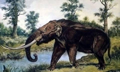 Μεγαλόπολη Αρκαδίας: Εντοπίστηκε σκελετός ελέφαντα της Κατώτερης Παλαιολιθικής Περίοδου (pic)