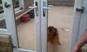 Ποτέ πριν μια μπαλκονόπορτα δεν είχε μπερδέψει τόσο έναν σκύλο! (video)