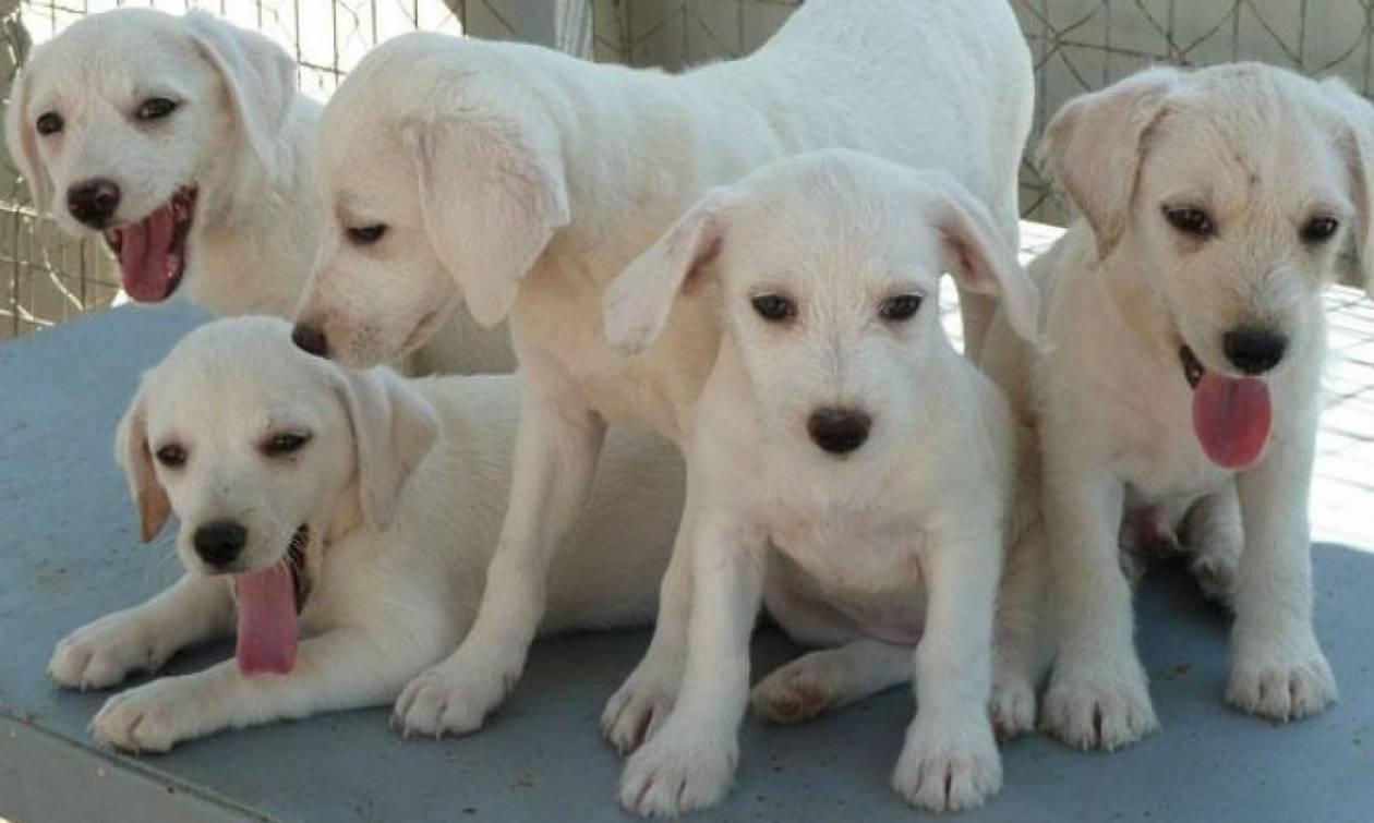 Η νομοθεσία για τους σκύλους γίνεται πιο αυστηρή στην Κύπρο