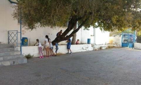 Πώς τα παιδιά των Σφακιανών κάνουν τη δική τους επανάσταση (video)