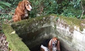 Υπόδειγμα συντρόφου: Σκυλί στέκεται για μια εβδομάδα δίπλα στον παγιδευμένο φίλο του!