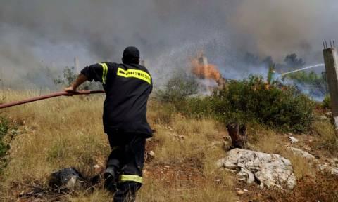 Φωτιά στη Σαλαμίνα - Δεν κινδυνεύουν κατοικίες