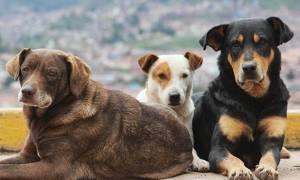 Στους Δήμους 1,3 εκατ. ευρώ για τα αδέσποτα ζώα