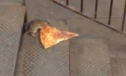 Απίστευτο βίντεο: Αρουραίος κουβαλά ένα γιγάντιο κομμάτι πίτσα!