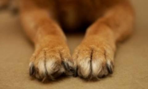 Λαμία: Σύλληψη 40χρονου για θανάτωση αδέσποτου σκύλου