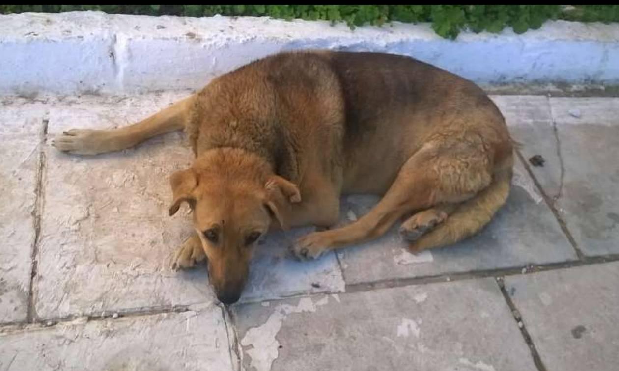 Αποτρόπαιο θέαμα στη Γαστούνη: Οδηγούσε μηχανάκι σέρνοντας νεκρό σκύλο