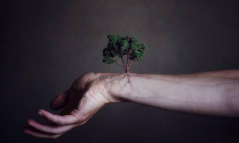 Tα δέντρα κατεβαίνουν σε απεργία - Διαβάστε τι συμβαίνει με τα φύλλα τους