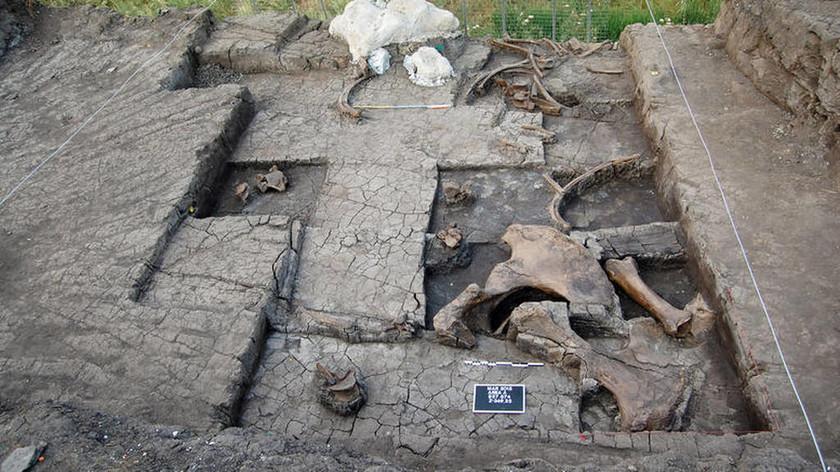 В Аркадии обнаружен скелет слона эпохи Палеолита