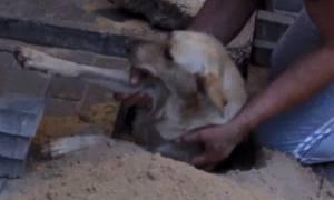 Έσωσαν σκυλάκι θαμμένο ζωντανό επί δύο ημέρες κάτω από πεζοδρόμιο (video)