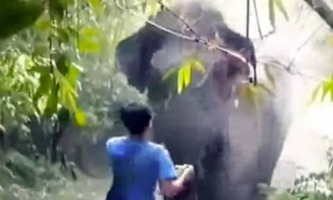 Ελέφαντας ετοιμάζεται να τον ποδοπατήσει μέχρι που… (video)