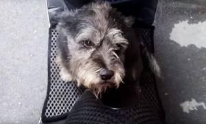 Συγκινητικό βίντεο: Σκυλίτσα ξαναβρίσκει την ιδιοκτήτριά της μετά από έξι ημέρες