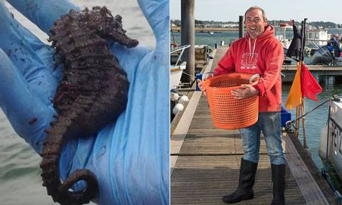 Ψάρεψε τον μεγαλύτερο «Βρετανό» ιππόκαμπο στην ιστορία και τον ελευθέρωσε (photos)