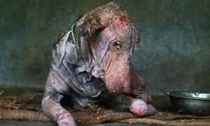Η αγάπη τον έκανε αγνώριστο: Δείτε τη συγκλονιστική μεταμόρφωση αυτού του σκύλου (video)