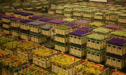 Ντραγκέτα: Η ιταλική μαφία ειδικεύεται στο εμπόριο ναρκωτικών, λουλουδιών και… σοκολάτας!