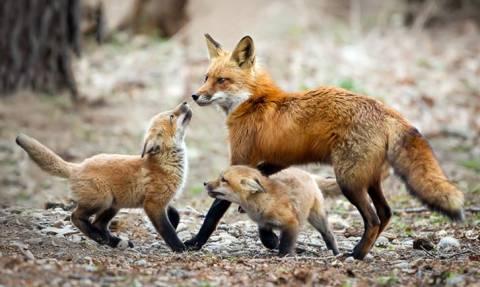 Κτηνωδία στον Έβρο: Μαζική δηλητηρίαση ζώων