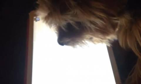 Πανέξυπνο σκυλάκι παίζει παιχνίδια στο... iPad! (video)