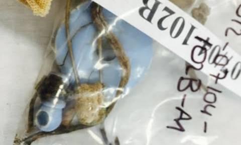 Ανατριχίλα: Μια πιπίλα δίπλα στα οστά του μικρότερου αγνοούμενου της Κύπρου (pics)