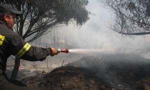 Ηράκλειο Κρήτης: Σε ύφεση η πυρκαγιά στο Καλό Χωριό Πεδιάδας
