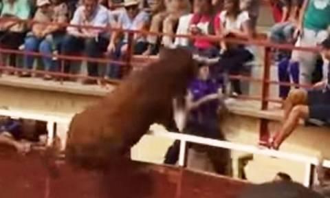 Αυτό είναι το άλμα του αιώνα: Ταύρος σκόρπισε τον τρόμο πηδώντας στην εξέδρα! (video)