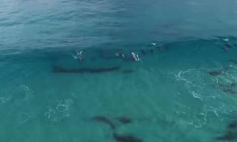 Στον ωκεανό με μια σανίδα και δύο φάλαινες για παρέα (video)