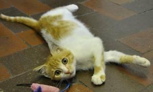 Γάτα λαθρεπιβάτης έφθασε στην Αγγλία από το Κάιρο